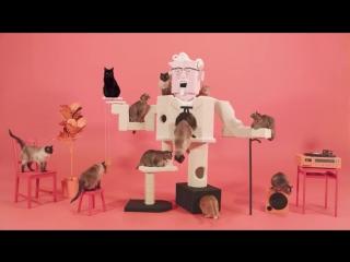 KFC и котики
