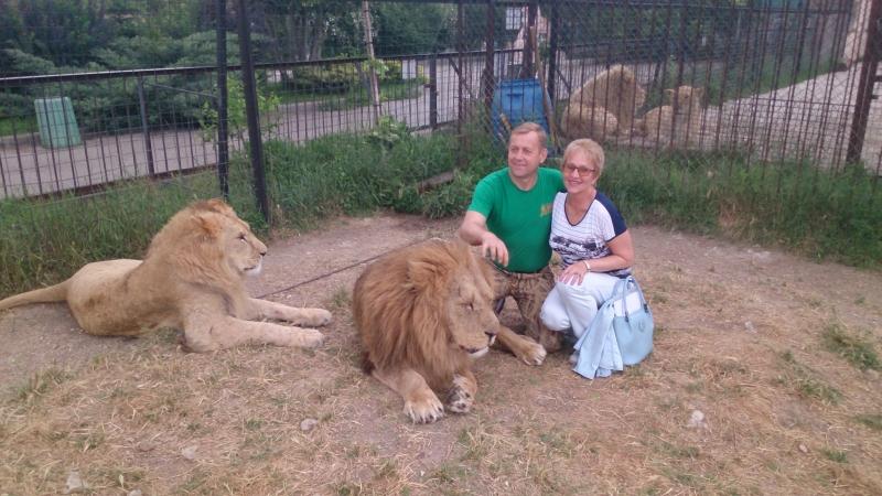 Визит к молодым львам в сафари