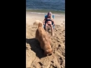 Dog Covers Owner with Sand at Beach ViralHog