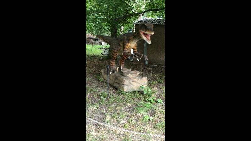 Динозавры 🦕 не вымерли