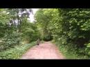Пение птиц в лесу 2