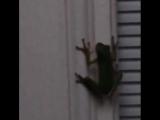 frog_vs_firefly