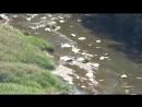 шёчки дарданеллы река Тигровая cklip scscscrp