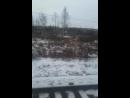 Антон Секисов - Live