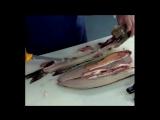 Как правильно чистить щуку ножом