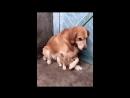 Самые смешные видео с животными смешные кошки видео для детей 2018 26 Прикольные видео ржака