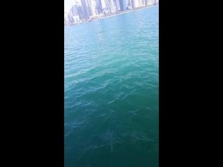 Катание на яхте по Персидскому заливу. Катар. Доха.2018г