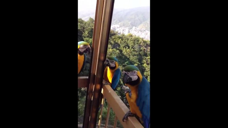 Попугаи обедают