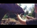 Купание, кайф для лошадок