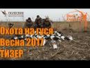 Охота на гуся DUCK EXPERT и ПОЛЕСНИК. Весна 2017. ТИЗЕР