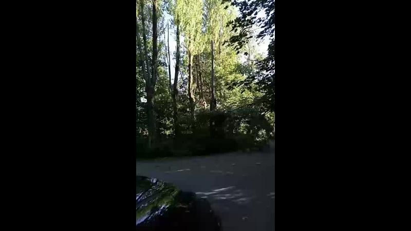 на улице Мира, п. Солнечное, на проводах дерево, у жителей сильный скачек напряжения, очень опасно!!