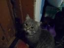 Владик уговаривает отпустить его на улицу (ГОВОРЯЩИЕ ЖИВОТНЫЕ смешные коты и кошки, Тюхтет где Боготол)