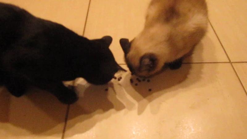 Коты едят веганский сыроедный корм от Фролова