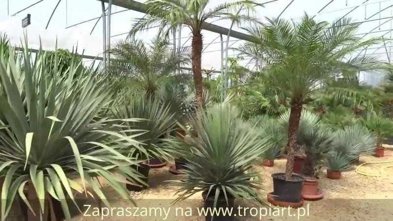Красота!оранжерея с пальмами и другими экзотическими растениями