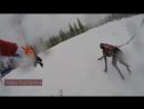 Уле Эйнар Бьорндален в Шушене гонки на собаках весна 2017