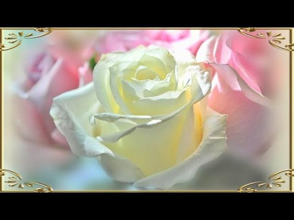 Розовая нежность цветов Изумительная красота Блюз Релакс