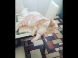 Мотивация от моего кота 😹!!! [YL]