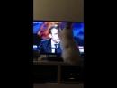даже кошка чувствует неверную нечесть макрошку