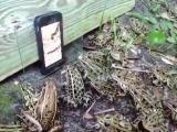 развлечения в саду для лягух