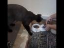 Кот Арнюся ест влажный корм GINA