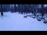 Прогулка по зимнему лесу. г.Петергоф Английский парк
