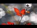 Мишель Легран Осенняя грусть 1