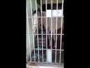 Лошадь- преступник за решеткой