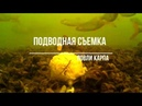 Подводная съемка ловли карпа на флэт или почему не клюет и кто съел прикормку