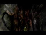 Прогулка на Демерджи от Ангарского перевала. Дерево в лесу. 19.04.2018.