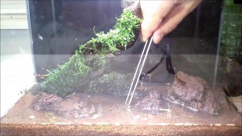 Запуск нано аквариума. Креветкариум 10 литров.