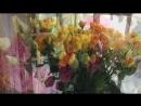 ГРИЛЬЯЖ | студия флористики | 5-86-46