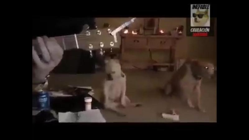 Правильный пёс