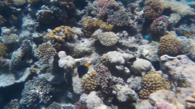 Первый опыт подводной съёмки.Бонус - Затонувшее судно.