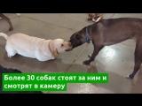 Все машите лапами: собака сделала селфи с друзьями