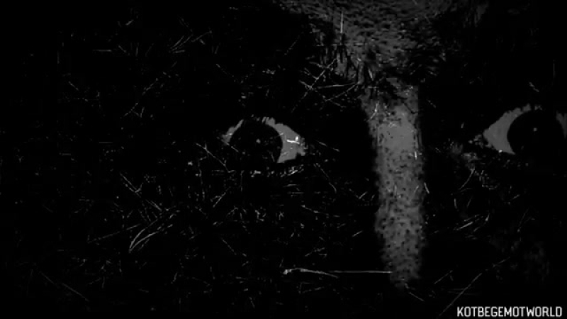 Страшные истории на ночь - НЕЧТО ЗАКАПЫВАЛО ДETEЙ. Страшилки на ночь. ( 360 X 640 ).mp4