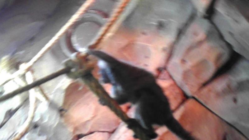 Экзотариум Морская Звезда.Веселые обезьянки.