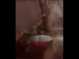 Для тех, кто мечтает о еноте (6 sec)