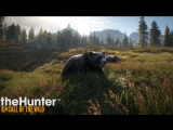 the HUNTER | Прогулки по лесу