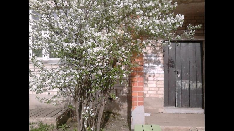 2014-05-01 Гр.Весна-Что творит весна в городе ,свободная любовь