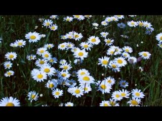 Самые невероятные красивые полевые цветы. The most incredible beautiful wild flowers