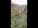 Спинальница Ульяша лезет на дерево