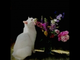 Спа-салон кота Кузи.