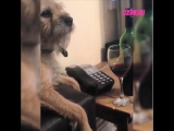 Очень правильная собака