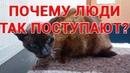 Какими Словами Кошки «Думали» О Своём Человеке, Жизнь Которого Должны Были Украшать