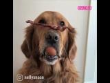 Собаки принимают участие в челлендже с яйцами