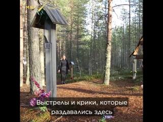 Чем известен Юрий Дмитриев