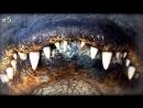 Интересные факты о восстановлении зубов 😃 ⠀ ✍ Записывайтесь на консульта mp4