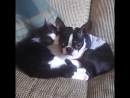 Любвеобильные котики