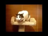 Блюющие техно коты