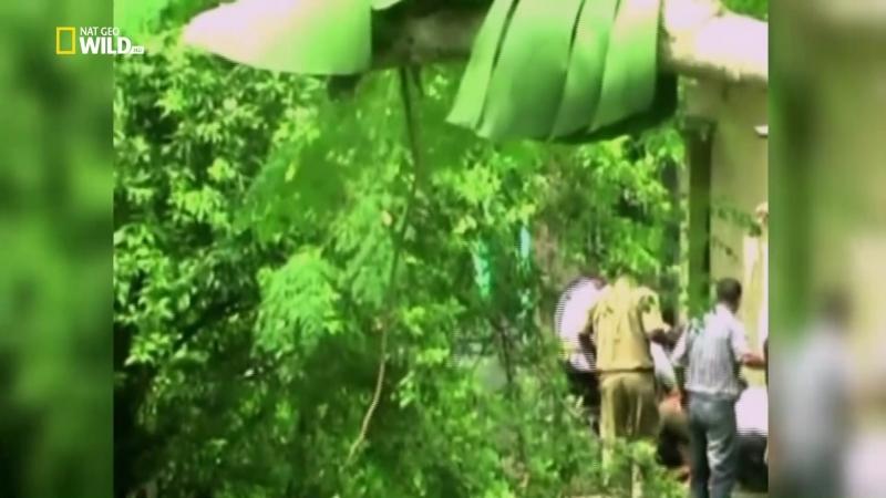 Nat Geo Wild: Самые опасные убийцы: Опасная зона (2013) HDTV 1080i